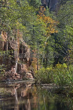 autumn oak creek canyon reflections oak