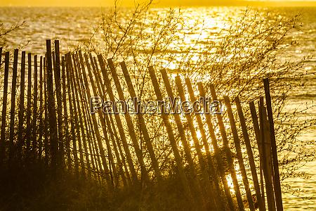 chesapeake bay kent maryland golden sunlight