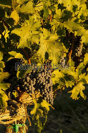 usa washington state royal slope cabernet