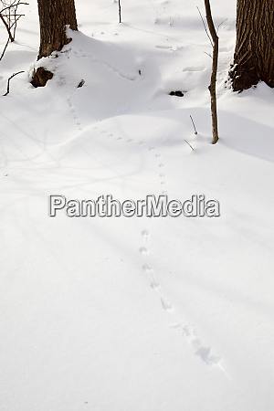 mouse tracks in the snow at