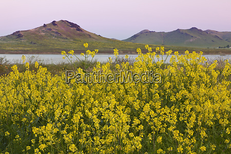 usa california porterville spring landscape with