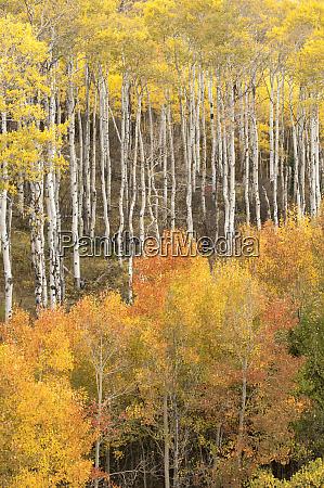 usa colorado fall colors