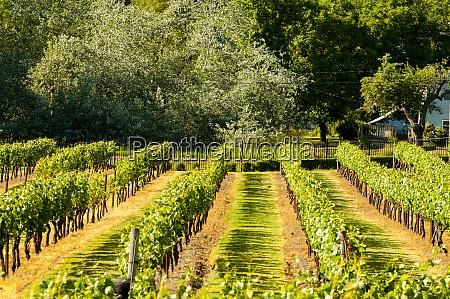 usa washington state ridgefield betheny vineyard