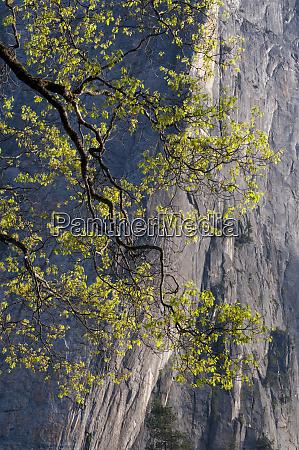 usa california yosemite national park middle