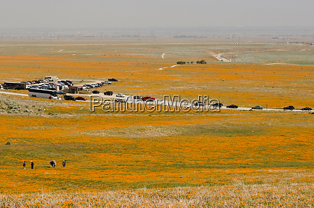 usa ca antelope valley poppy reserve