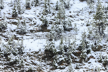 first snow of october continental divide
