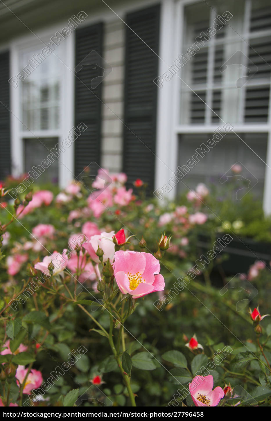 flowers, in, front, of, a, property - 27796458