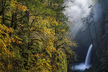 usa oregon autumn fall color and