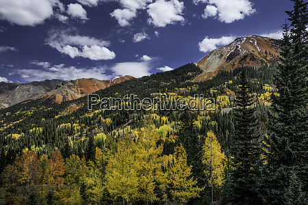 red mountain and autumn aspen trees