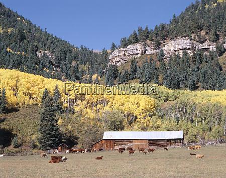 usa colorado autumn landscape along highway