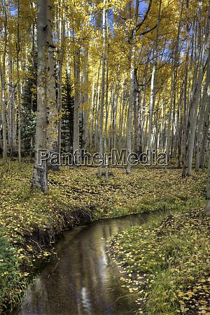 usa colorado rocky mountains mountain stream