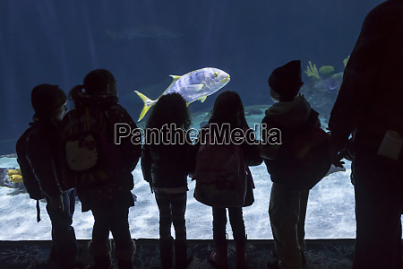 point defiance zoo and aquarium tacoma