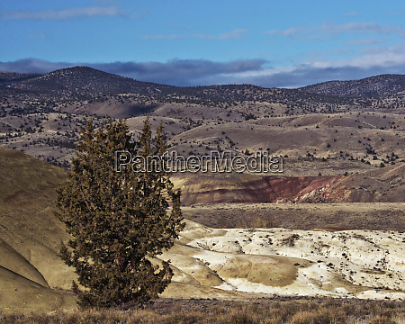 juniper hills preserve painted hills john