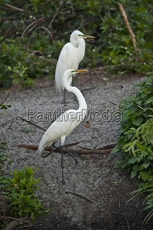 usa florida venice audubon rookery great