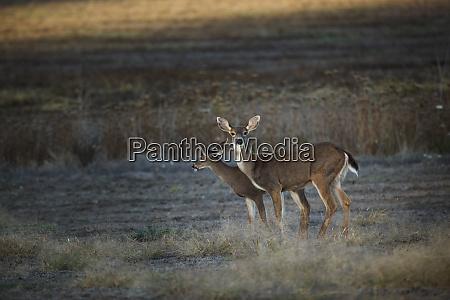 usa oregon baskett slough national wildlife
