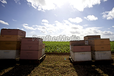 usa florida homestead agricultural area beehives