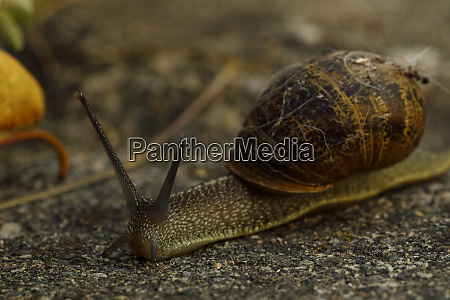 usa oregon keizer snail in the