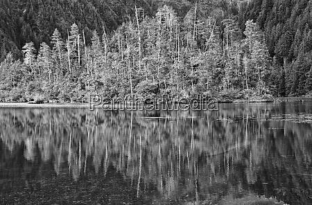 usa alaska inside passage reflecting trees