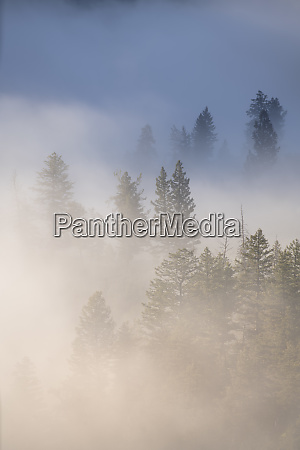 usa wyoming yellowstone national park cold