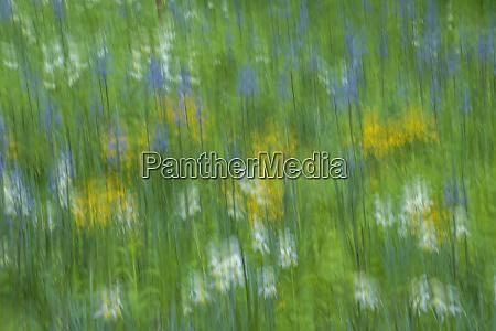 usa pennsylvania wayne chanticleer garden credit