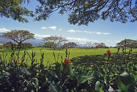 golfing in the tropics