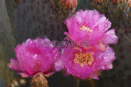 painting, effect, on, beavertail, prickly, pear - 27814696