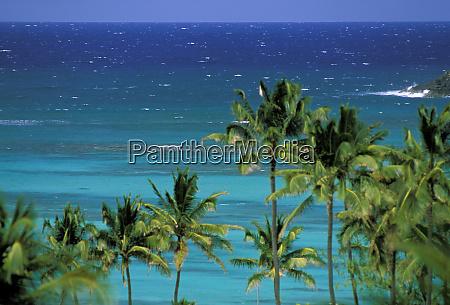 usa hawaii palms and ocean view