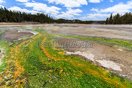 colored thermophilic bacteria in yellowstone national