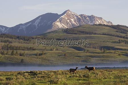 rocky mountain elk electric peak