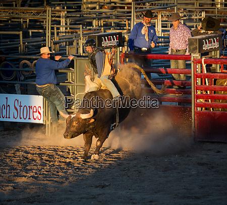 usa arizona buckeye hellzapoppin arena cowboy
