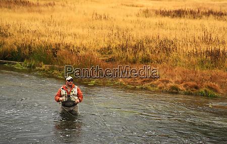 usa wyoming yellowstone national park flyfishing