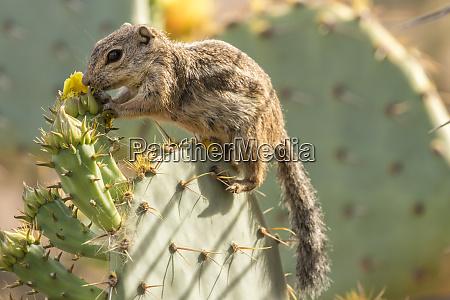 usa arizona desert botanic garden harriss
