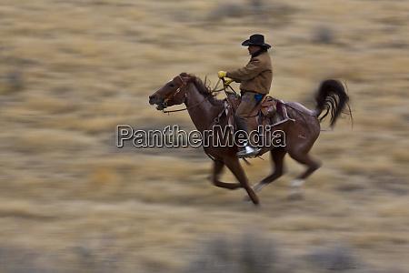 usa wyoming shell cowboy at full