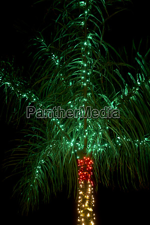 usa florida sanibel island christmas palm