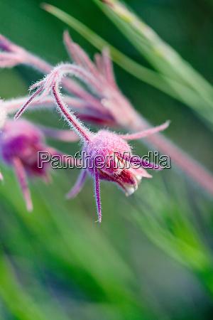 macro photo of prairie flowers in