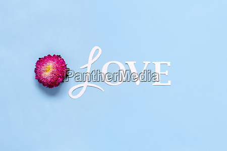 flower and word love on a