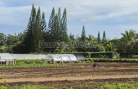 kilauea kauai hawaii organic local farm