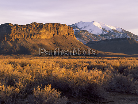 utah nevada usa brush at sunset