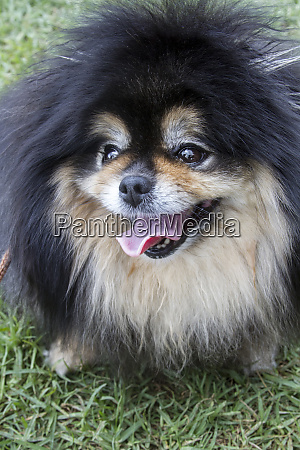 cute dog hawaii usa