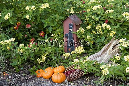 birdhouse pumpkins and ornamental corn in