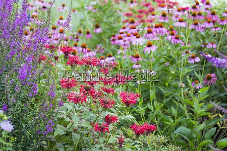 flower garden purple coneflowers red bee