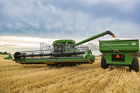 wheat harvest marion county illinois