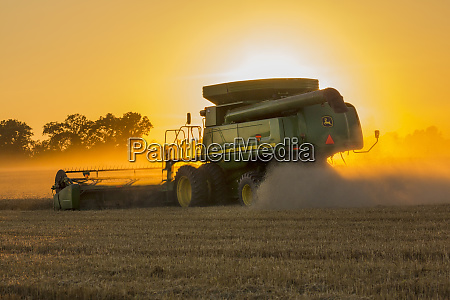 wheat harvest at sunset marion county