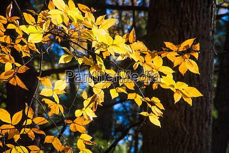 sunlight filtering through colorful fall foliage