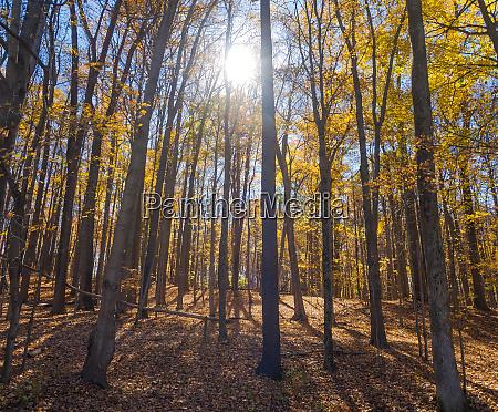 sun shining through colorful fall foliage