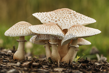 group of mushrooms growing in landscaping