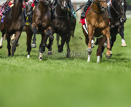 grass turf horse racing