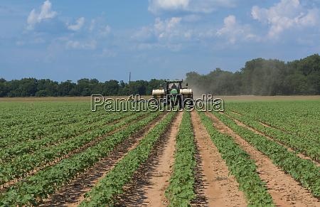 colfax louisiana cotton fields rows of