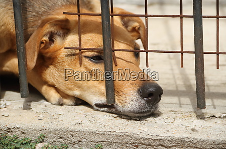 dogs locked up victims of animal