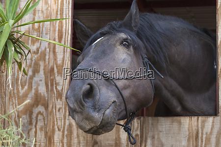 horse posing
